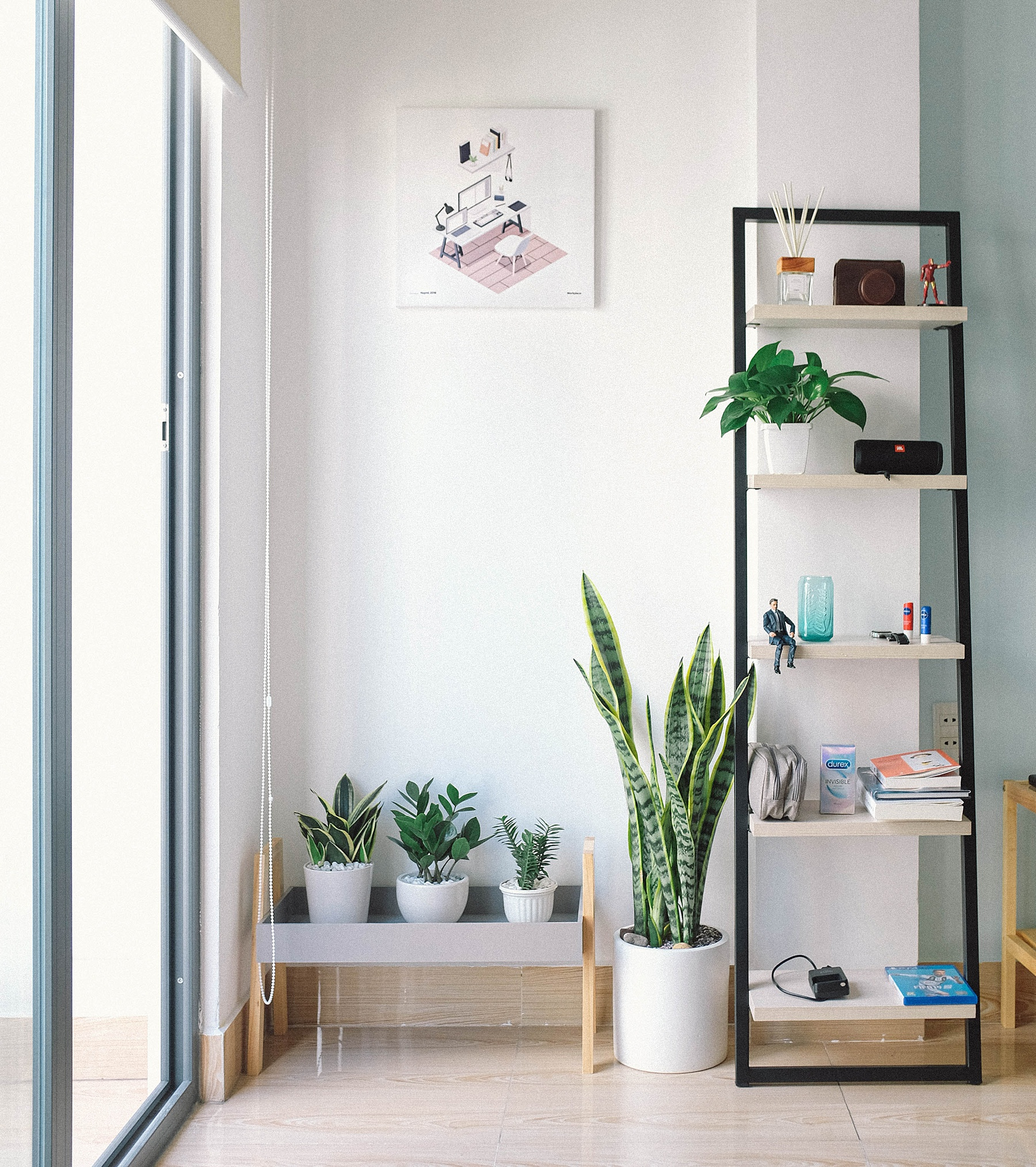 Corner area of home decorated with snake plants and other greenery among other modern decor